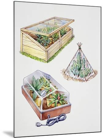 Greenhouse, Plastic Covering for Plants and Plant Propagation Box--Mounted Giclee Print