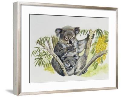 Koala Doe (Phascolarctos Cinereus) with Joey, Phascolarctidae--Framed Giclee Print