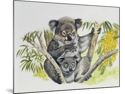 Koala Doe (Phascolarctos Cinereus) with Joey, Phascolarctidae--Mounted Giclee Print