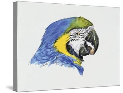 Close-Up of a Blue-And-Yellow Macaw (Ara Ararauna)--Stretched Canvas Print
