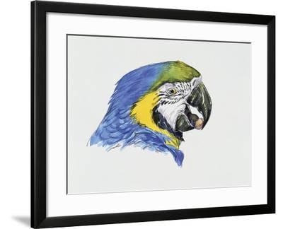 Close-Up of a Blue-And-Yellow Macaw (Ara Ararauna)--Framed Giclee Print