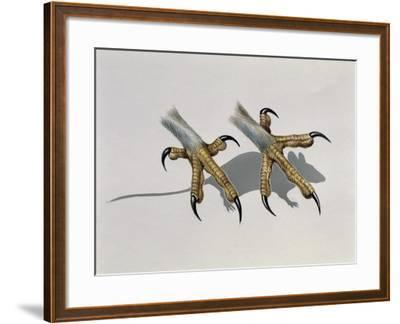 Close-Up of an Owl's Claws Reaching for a Mouse--Framed Giclee Print