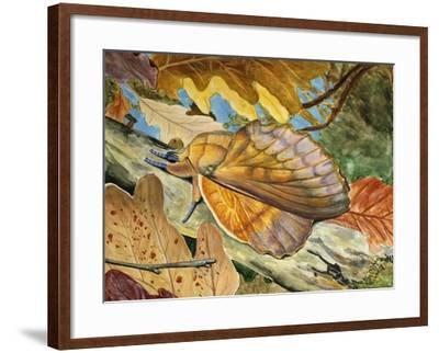Lappet (Gastropacha Quercifolia), Lasiocampidae--Framed Giclee Print