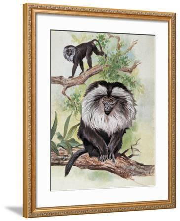 Two Lion-Tailed Macaque on a Tree (Macaca Silenus)--Framed Giclee Print