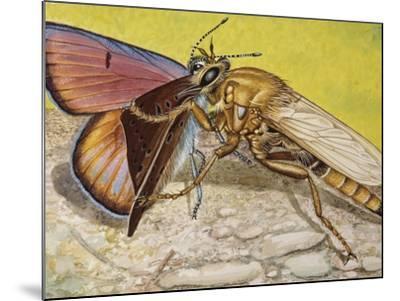 Hornet Robberfly (Asilus Crabroniformis), Asilidae--Mounted Giclee Print