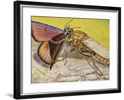 Hornet Robberfly (Asilus Crabroniformis), Asilidae--Framed Giclee Print