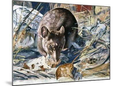 House Mouse (Mus Musculus), Muridae, Drawing--Mounted Giclee Print