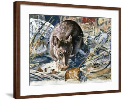 House Mouse (Mus Musculus), Muridae, Drawing--Framed Giclee Print