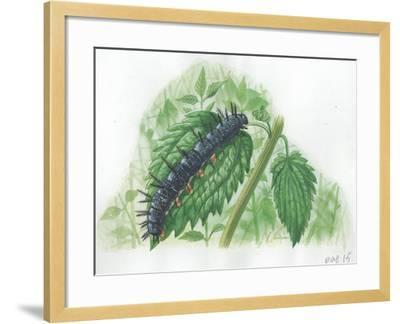 Caterpillar of European Peacock Butterfly Inachis Io--Framed Giclee Print