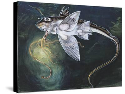 Holocephali Swimming Underwater (Chimaera Monstrosa)--Stretched Canvas Print