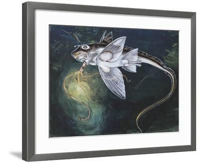 Holocephali Swimming Underwater (Chimaera Monstrosa)--Framed Giclee Print