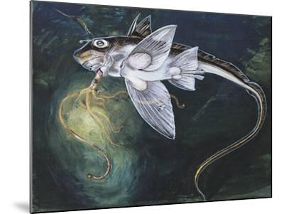 Holocephali Swimming Underwater (Chimaera Monstrosa)--Mounted Giclee Print