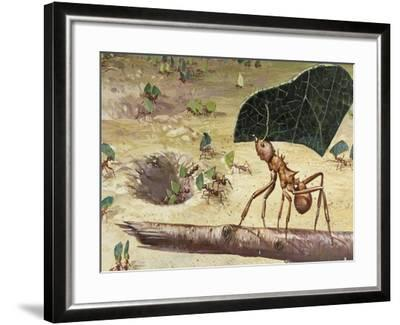 Leafcutter Ant (Acromyrmex Lundii), Formicidae--Framed Giclee Print