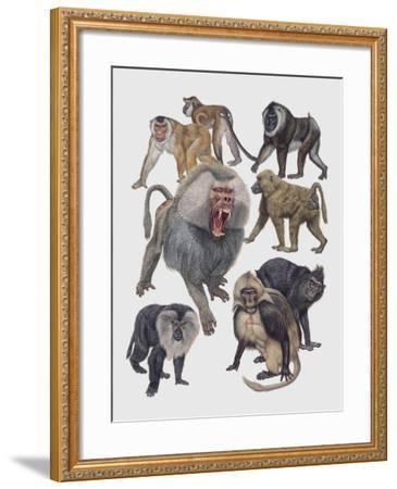 Close-Up of a Group of Cercopithecidaes--Framed Giclee Print