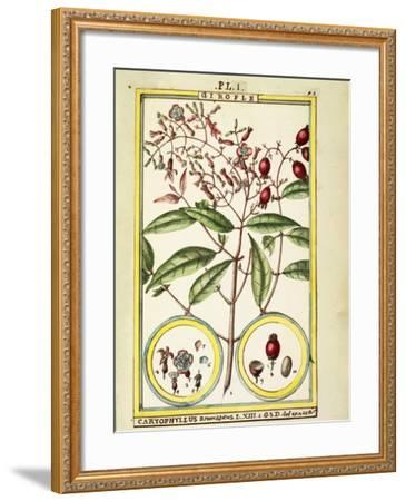 Clove (Caryophyllus Aromaticus), 1789--Framed Giclee Print