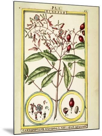 Clove (Caryophyllus Aromaticus), 1789--Mounted Giclee Print