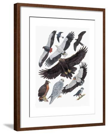 Close-Up of Falcons--Framed Giclee Print