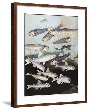 Close-Up of a Group of Lantern Fish--Framed Giclee Print