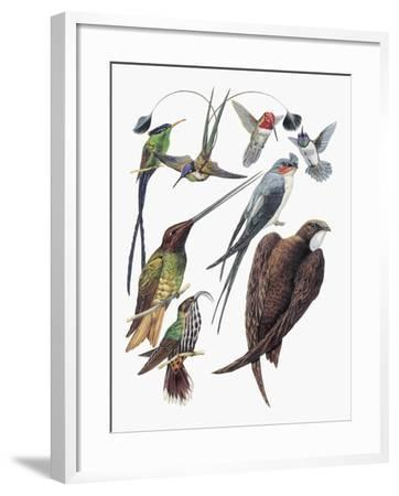 Close-Up of Hummingbirds and Swifts--Framed Giclee Print