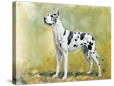 Great Dane (Canis Lupus), Canidae, Drawing--Stretched Canvas Print