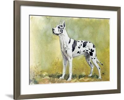 Great Dane (Canis Lupus), Canidae, Drawing--Framed Giclee Print