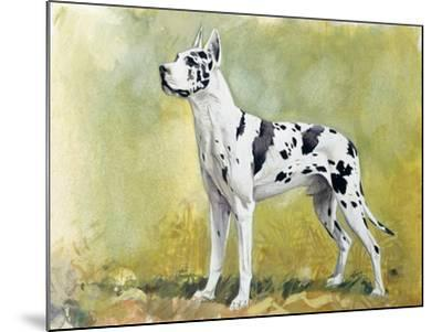 Great Dane (Canis Lupus), Canidae, Drawing--Mounted Giclee Print