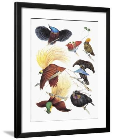Close-Up of a Group of Birds--Framed Giclee Print