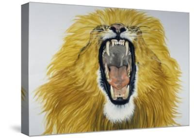 Lion (Phantera Leo), Felidae--Stretched Canvas Print