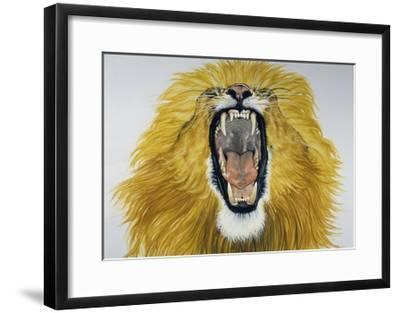 Lion (Phantera Leo), Felidae--Framed Giclee Print