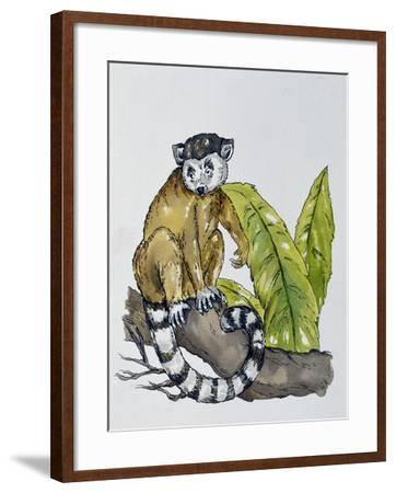 Ring-Tailed Lemur (Lemur Catta), Lemuridae--Framed Giclee Print
