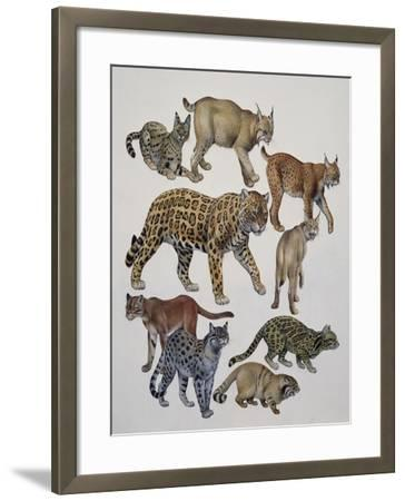 Carnivores Belonging to the Felidae Family--Framed Giclee Print