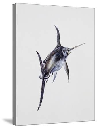 Close-Up of a Swordfish (Xiphias Gladius)--Stretched Canvas Print