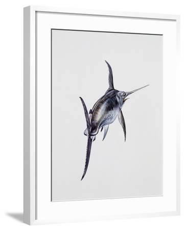 Close-Up of a Swordfish (Xiphias Gladius)--Framed Giclee Print