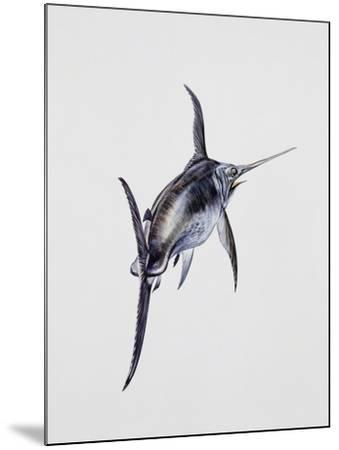 Close-Up of a Swordfish (Xiphias Gladius)--Mounted Giclee Print