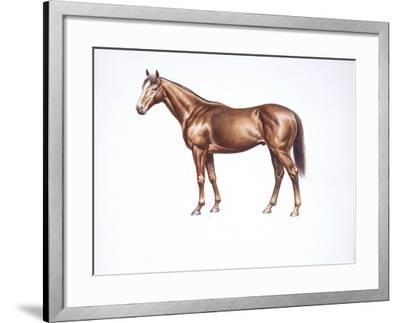 English Thoroughbred (Equus Caballus)--Framed Giclee Print
