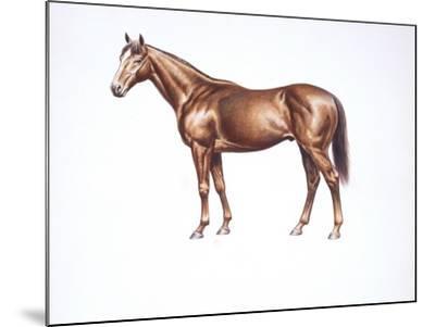 English Thoroughbred (Equus Caballus)--Mounted Giclee Print