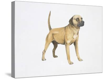 Cur Dog--Stretched Canvas Print