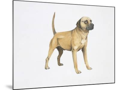 Cur Dog--Mounted Giclee Print