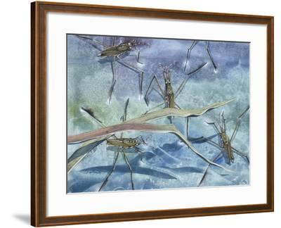 Insects--Framed Giclee Print