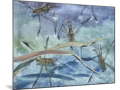 Insects--Mounted Giclee Print