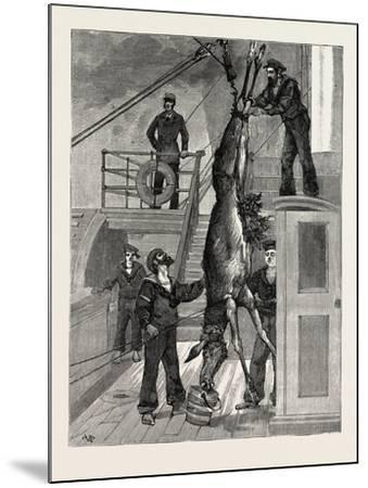 Weighing the Prince's Elk on Board the Osborne, Sweden--Mounted Giclee Print