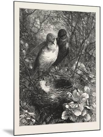 The First Nest, 1876, Bird, Birds, Spring, Nature--Mounted Giclee Print
