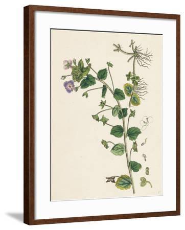 Veronica Buxbaumii Buxbaum's Speedwell--Framed Giclee Print