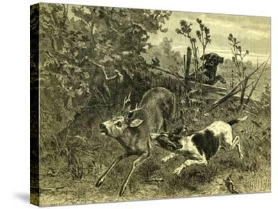 Deer Dog Hunt Austira 1891--Stretched Canvas Print