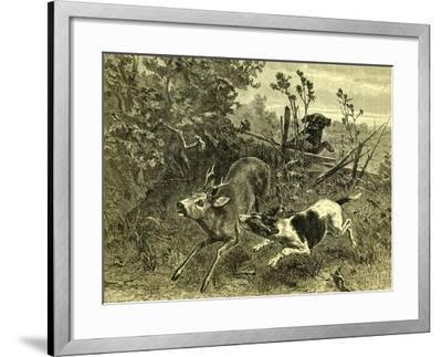 Deer Dog Hunt Austira 1891--Framed Giclee Print