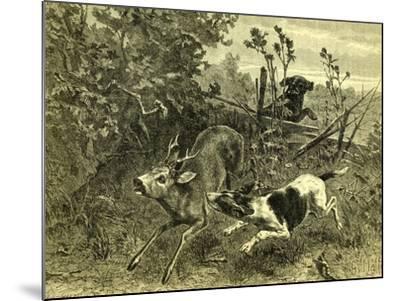 Deer Dog Hunt Austira 1891--Mounted Giclee Print