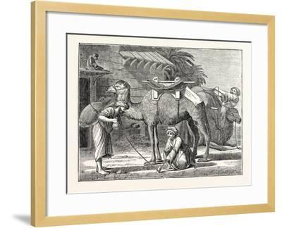 The Arabian Camel--Framed Giclee Print