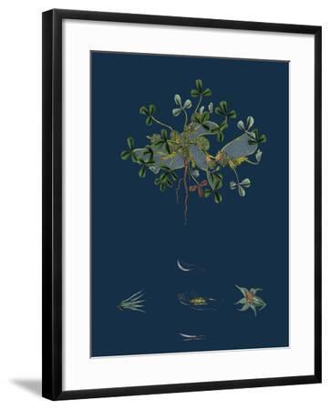 Botanical Illustration--Framed Giclee Print