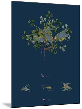 Botanical Illustration--Mounted Giclee Print