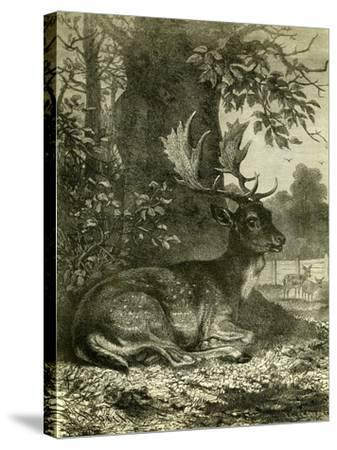 Hunting Austria 1891--Stretched Canvas Print